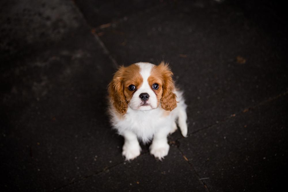 hondjes-sneeuw-7262-klein
