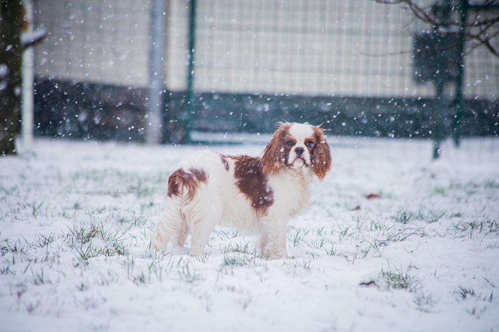 hondjes-sneeuw-7214-klein
