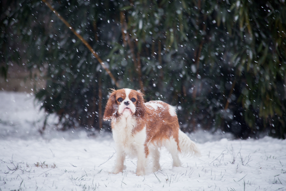 hondjes-sneeuw-7211-klein