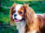 Onze mooie honden